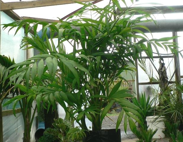 بعض نباتات الزينة المستخدمة ف تنسيق